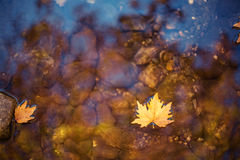 Colorful autumn leaf on water Royalty Free Stock Images