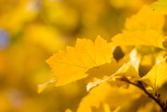 Colorful autumn leafes macro Stock Photography