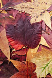 Colorful autumn leafs Royalty Free Stock Photos