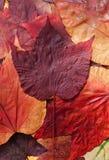 Colorful autumn leafs Stock Photos