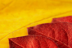 Colorful autumn leafs Royalty Free Stock Image