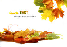 Free Colorful Autumn Leaves Stock Images - 11472974
