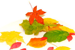 Colorful autumn leaves. Colorful autumn leaves floating in water Stock Photography