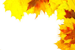 Colorful autumn leaves. Border from colorful autumn leaves Stock Photo