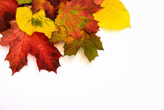 Colorful autumn leaves. Colorful fall leaves isolated on white background Stock Image