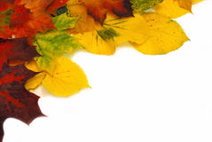 Colorful autumn leaves. Colorful fall leaves isolated on white background Stock Photography