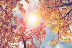 Colorful Autumn Leaves against blue sky. Toned image Stock Image