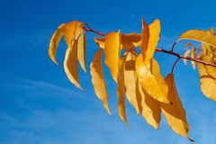 Colorful autumn leaves against the sky Stock Photography