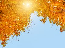 Free Colorful Autumn Leaves Against The Blue Sky, Sun And Clouds. Copyspace, Background Stock Image - 147221041
