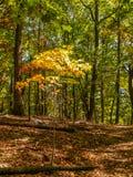 Autumn Hiking at Pilot Mountain State Park stock image