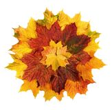 Colorful autumn leaves arranged in a flower shape. Studio shot of colorful autumn leaves arranged as a circle to resemble a flower Royalty Free Stock Photography