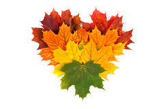 Colorful autumn leaves royalty free stock photos