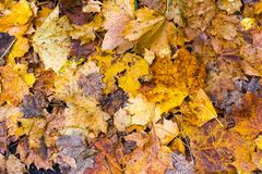 Colorful autumn leaves arrangement 14 Stock Photography