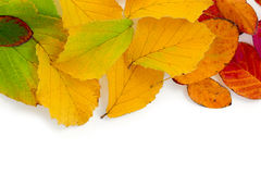 Colorful autumn leaves as a  border background isolated on white Royalty Free Stock Photo