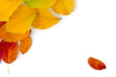 Colorful autumn leaves as a corner background isolated on white Stock Image