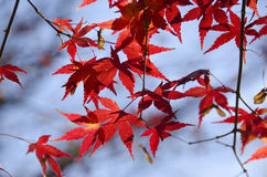 Colorful autumn leaves background Stock Photography