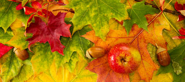 Colorful autumn leaves background and apple. Stock Photo