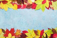 Colorful autumn leaves background banner top view. Fall sale mockup. Copy space for text. Royalty Free Stock Photos
