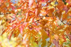 Colorful autumn leaves background. Colorful autumn leaves blur background Stock Images