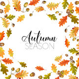 Colorful Autumn Leaves Background. Floral Banner Design Stock Image