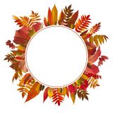 Colorful autumn leaves background. With free space for your text Stock Image