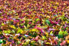 Colorful Autumn Leaves Background in HDR High Dynamic Range Stock Photo