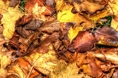 Colorful Autumn Leaves Background in HDR High Dynamic Range Royalty Free Stock Photo