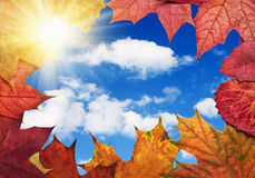 Colorful autumn leaves on a background of the sky Royalty Free Stock Photography