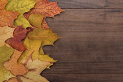 Colorful autumn leaves background Royalty Free Stock Photography