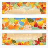 Colorful autumn leaves banners Royalty Free Stock Images