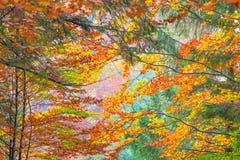 Colorful Autumn Leaves - beautiful sesonal horizontal background Stock Photo