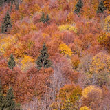 Colorful autumn leaves in black forest, Germany Stock Photos