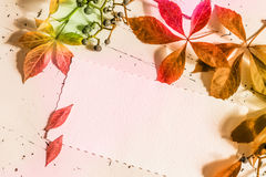 Colorful autumn leaves with blank letter, top view Stock Photo