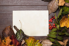 Colorful autumn leaves and blank sheet of paper Stock Photography