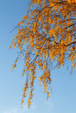 Colorful Autumn Leaves and blue sky. Stock Photos