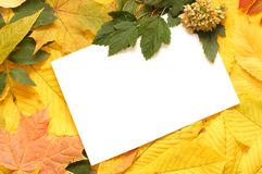 Free Colorful Autumn Leaves Border Royalty Free Stock Image - 11008656