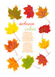 Colorful autumn leaves border Stock Photography