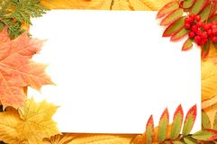 Colorful autumn leaves border or frame. Beautiful seasonal concept Royalty Free Stock Images