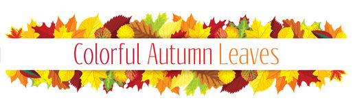 Colorful autumn leaves border Royalty Free Stock Image