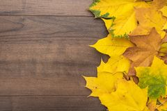 Yellow leaves background. Colorful autumn leaves on brown table. fall season concept background stock image