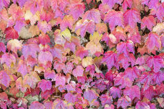 Colorful autumn leaves in Canakkale, Turkey Stock Photos