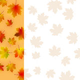 Colorful autumn leaves card. Royalty Free Stock Images