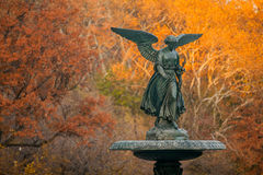 Colorful Autumn. Leaves in Central Park, New York City royalty free stock images