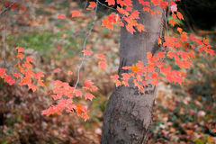 Colorful Autumn. Leaves in Central Park, New York City.n stock photography
