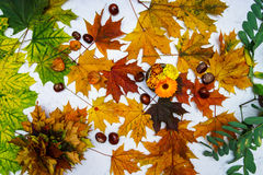 Colorful autumn leaves and chestnuts Royalty Free Stock Photography