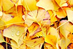 Colorful autumn leaves in a city park Stock Photos