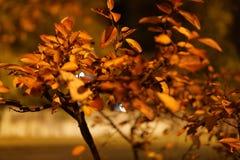 Colorful autumn leaves close up with night illumination stock photo