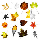 Colorful autumn leaves collage with bleached squares and grid Royalty Free Stock Photo