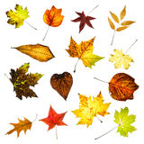 Colorful autumn leaves collage Royalty Free Stock Photo