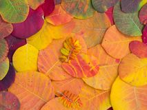 Colorful autumn leaves. Colored colorful autumn leaves background Royalty Free Stock Photos